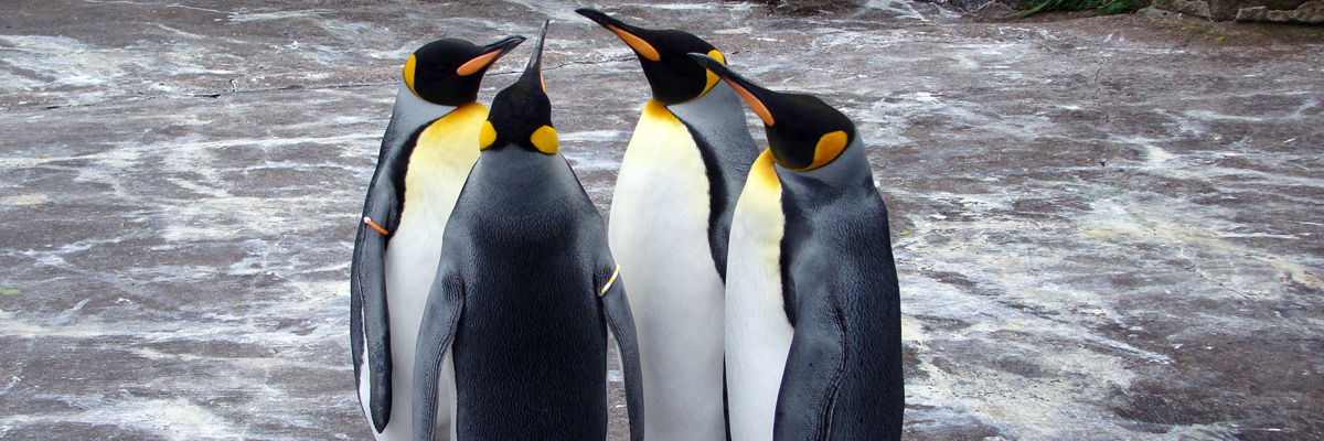Join a Penguin March